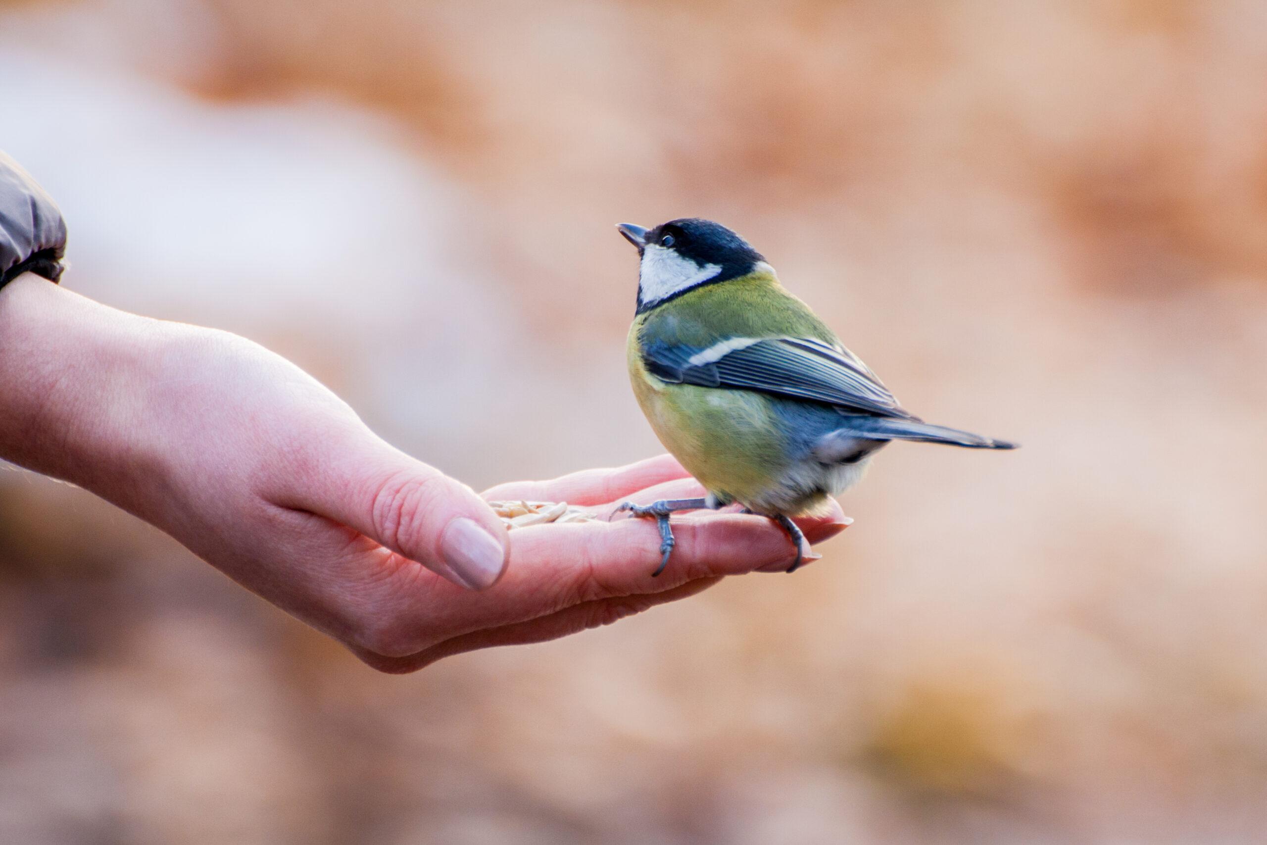 How to help garden birds through the lean winter months