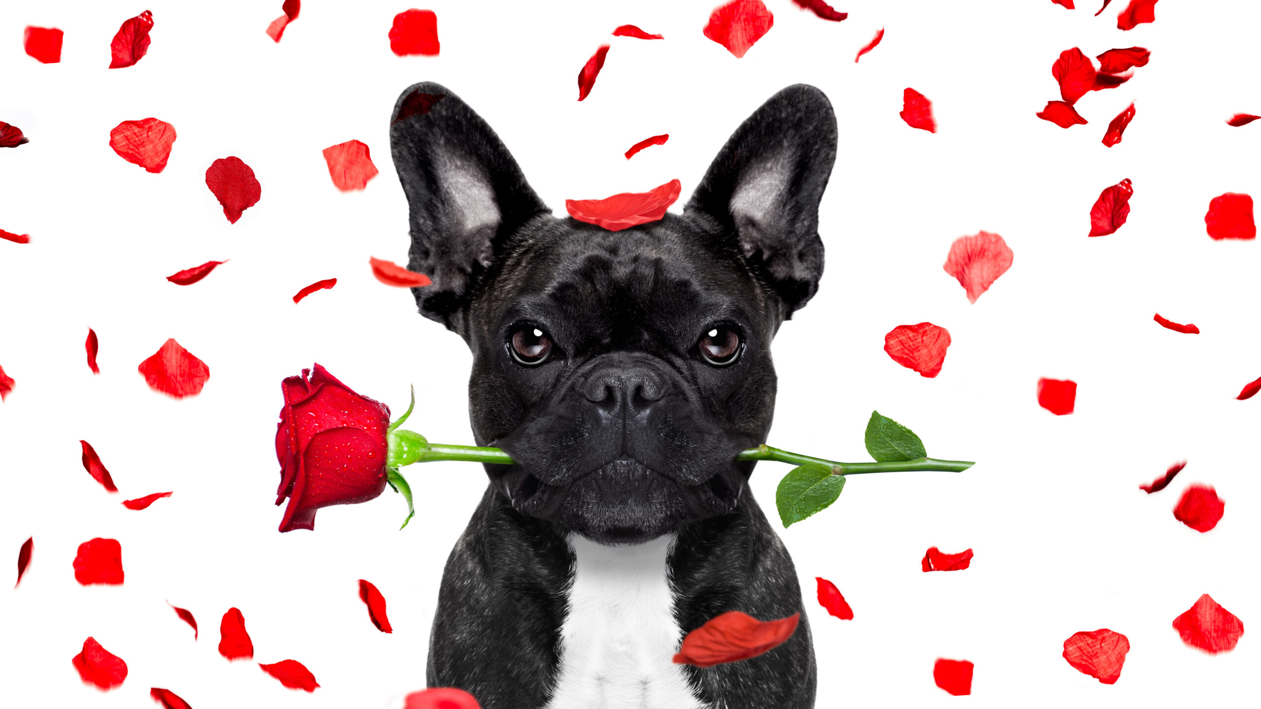 How businesses are sharing the love this Valentine's